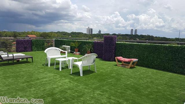 屋顶绿化.jpg